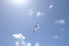 Sea - Bird 2b-LOW RES 1024px