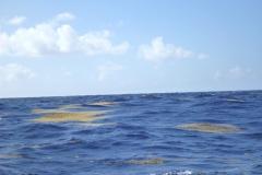 Sea - Close to Barbados Land-LOW RES 1024px