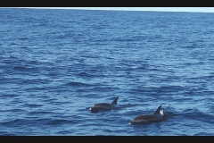 Sea - Dolphins1-LOW RES 1024px