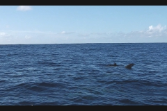 Sea - Dolphins7-LOW RES 1024px