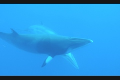 Sea - Whale5-LOW RES 1024px
