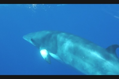 Sea - Whale6-LOW RES 1024px