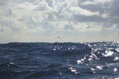 Sea - Bird 1a-LOW RES 1024px