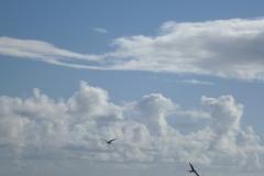 Sea - Bird 2a-LOW RES 1024px