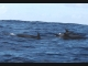 Sea - Dolphins2-LOW RES 1024px