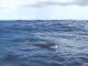 Sea - Only LR - Ellie Minke Mutter-LOW RES 1024px