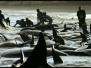 Unterwasserlärm / OceanCare